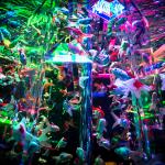 Art aquarium 2015.